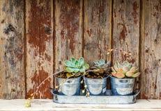 Plantas rústicas Imagens de Stock Royalty Free