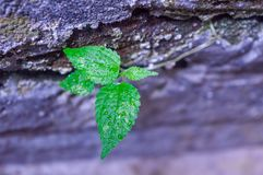 Plantas resistentes Foto de Stock