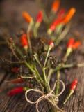 Plantas secadas de la pimienta roja Fotografía de archivo libre de regalías