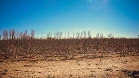 Plantas secadas en el desierto de Gobi, China imagen de archivo