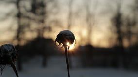 Plantas secas contra um fundo do sol brilhante no inverno vídeo de movimento lento vídeos de arquivo