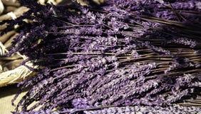 Plantas secas da alfazema fotos de stock