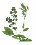 Plantas secas del herbario ejemplo del vector de las flores y de las hojas Fotografía de archivo