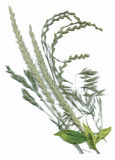 Plantas secas del herbario ejemplo del vector de las flores y de las hojas Foto de archivo libre de regalías