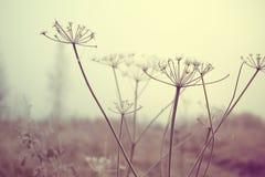 Plantas secas del prado Imagen de archivo libre de regalías