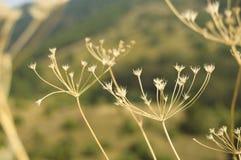 Plantas secas en el campo Imagenes de archivo