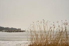 Plantas secas en la playa como textura con el puerto fotografía de archivo libre de regalías