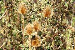 Plantas secas nos raios Imagem de Stock