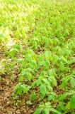 Plantas selvagens Foto de Stock Royalty Free