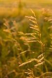 Plantas selvagens Fotografia de Stock Royalty Free