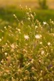 Plantas selvagens Fotos de Stock