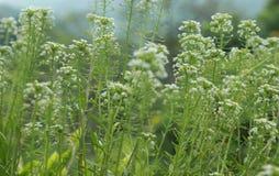 Plantas selvagens Foto de Stock