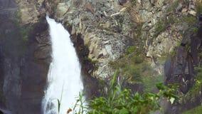 Plantas selvagens contra o contexto de uma cachoeira da montanha video estoque