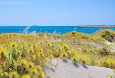 Plantas selvagens da duna ao longo da linha da costa do Oceano Índico Fotos de Stock
