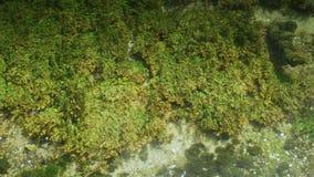Plantas selvagens da grama da água filme