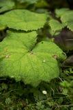 Plantas selvagens e flor Foto de Stock Royalty Free