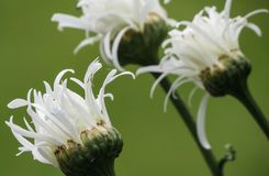 Plantas selvagens em ireland no verão em Longford Imagens de Stock