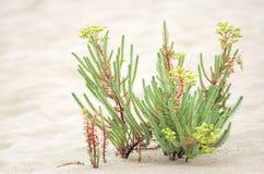 Plantas selvagens na areia fotos de stock royalty free