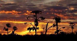 Plantas selvagens no por do sol no verão Fotos de Stock