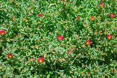 Plantas silvestres Fotografía de archivo libre de regalías