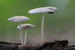 plantas silvestres en bosque Fotos de archivo libres de regalías