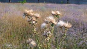 Plantas silvestres en la puesta del sol en un prado almacen de video