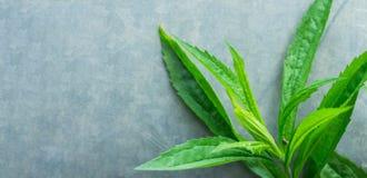 Plantas silvestres verdes con las hojas estrechas largas en el fondo de Grey Concrete Stone Cement Metal Salud que cultiva un hue Fotos de archivo libres de regalías