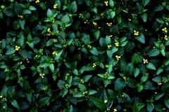 Plantas silvestres verdes y amarillas imágenes de archivo libres de regalías