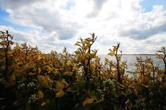Plantas sob a luz solar ao longo do litoral fotografia de stock royalty free