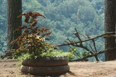 plantas sobre potenciômetros da roda fotografia de stock