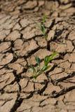 Plantas solas en suelo seco Fotos de archivo