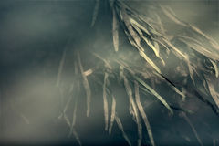 Plantas subacuáticas del río Foto de archivo