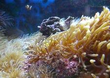 Plantas subaquáticas Imagens de Stock