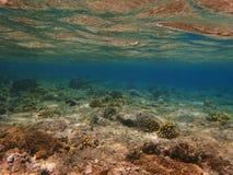 Plantas subaquáticas Foto de Stock Royalty Free