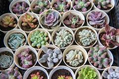 Plantas suculentas Fotos de archivo