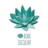 Plantas suculentas libre illustration