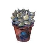 Plantas suculentas Imagenes de archivo