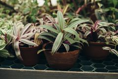 Plantas suculentas hechas en casa en los potes imágenes de archivo libres de regalías