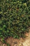 Plantas suculentas que crecen la visión superior imagen de archivo libre de regalías