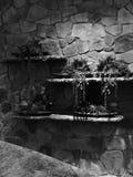 Plantas suculentos preto e branco na parede de pedra Imagens de Stock Royalty Free