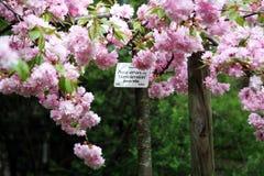 Plantas tempranas de la primavera en el jardín botánico, Zagreb, Croacia, 26 foto de archivo