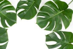 Plantas tropicais Foto de Stock Royalty Free