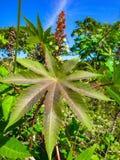 Plantas tropicais Fotografia de Stock Royalty Free