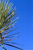 Plantas tropicais Imagem de Stock
