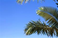 Plantas tropicais Foto de Stock