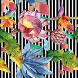 Plantas tropicais coloridas Flor botânica floral Teste padrão sem emenda do fundo imagens de stock