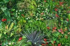 Plantas tropicais com flores - fundo natural Foto de Stock Royalty Free