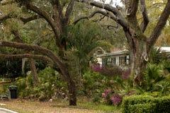 Plantas tropicais e carvalhos Fotos de Stock Royalty Free