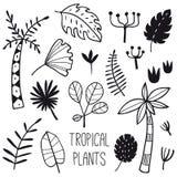 Plantas tropicais e folhas ajustadas ilustração stock