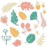 Plantas tropicais e folhas ajustadas Fotografia de Stock Royalty Free